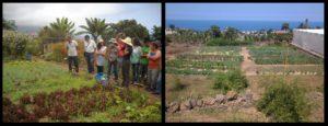 Wanderführungen durch Kräutergärten