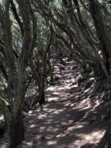 Uriger Wanderweg auf der Hochebene Teno Alto